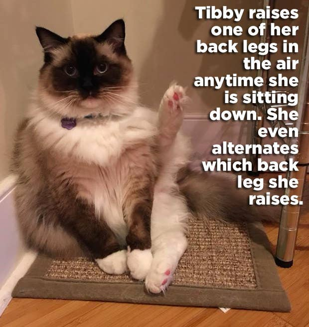 21 Hilariously WTF Things Cats Have Actually Done