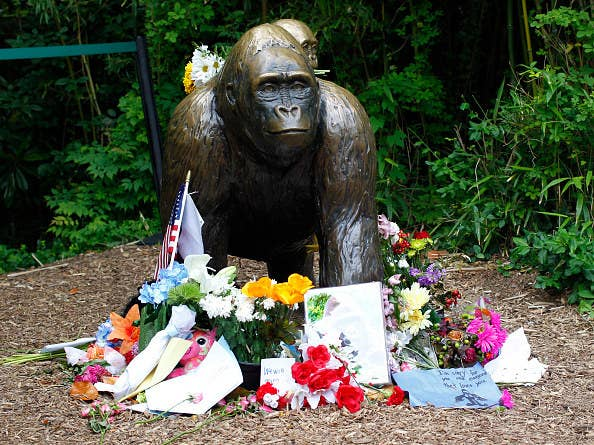 Harambe (the gorilla who died). Obviously.