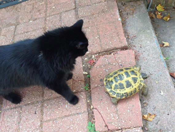 Behold, a turtle guiding his cat on a grand adventure into the great unknown.