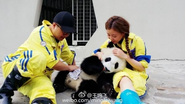 A trending page on Weibo, #BoycottGiantPandaFantasy, has reached more than four million views and got thousands of comments, after a panda fan noticed photos posted on the account of one of the celebrities tasked with raising the young panda on the show. The fan wrote a long article to condemn the entertainment industry meddling with animals' natural environment and urged for the cub to be returned to its mother.