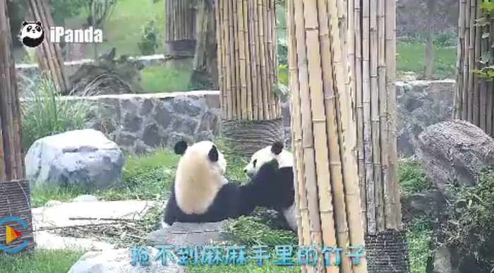 The panda-obssessed country even got a state-run panda website dedicated to live-broadcast pandas' daily lives 24/7 for the panda fans that are a little bit intense....Panda.