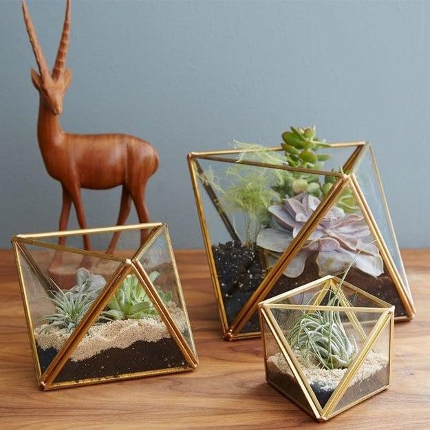 Este juego de terrarios geométricos para darle un nuevo hogar a tus plantas ($424-$509).