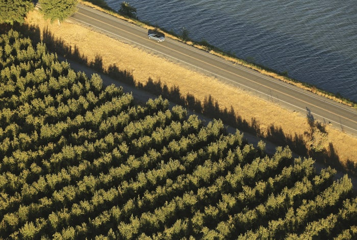 A vineyard and levee road are shown in the Sacramento San Joaquin River Delta near Walnut Grove, California, on Sep. 4, 2013.