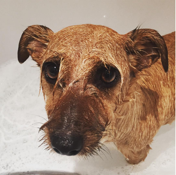 Does your dog give you the saddest puppy eyes when you give them a wash?