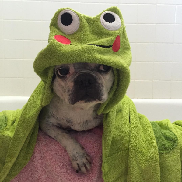 We love to see our sweet lil' puppers all fresh and clean and wrapped in adorable towels. Even if they hate us for it.