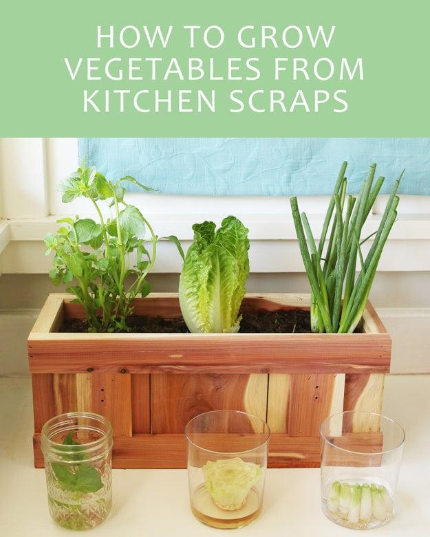 légumes à faire repousser indéfiniment (dans votre cuisine) Sub-buzz-16711-1474413304-2