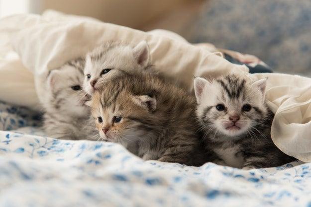 Show Us Your Beautiful Senior Cats