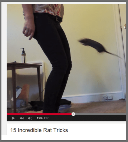This very talented rat: