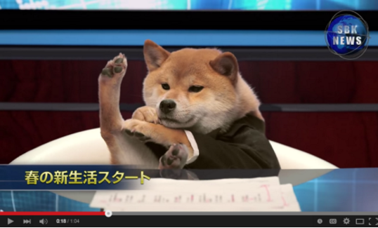 This shiba who is honestly the only newscaster who matters.