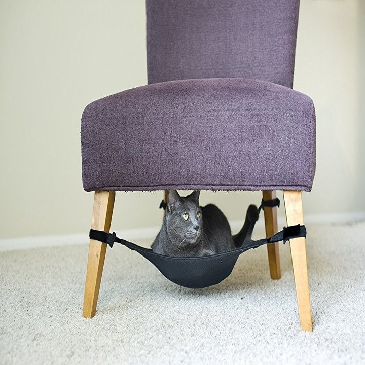 Cat Toy That Attaches To A Chair