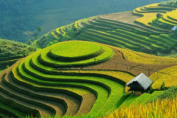 Este campo de arroz en Tailandia.