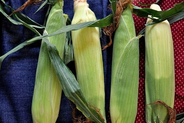 Corn should be left in the husk until the very last minute because, otherwise, it'll lose flavor.