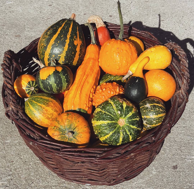 IT IS PUMPKIN SEASON. (Sorry for shouting but I am just so excited.)