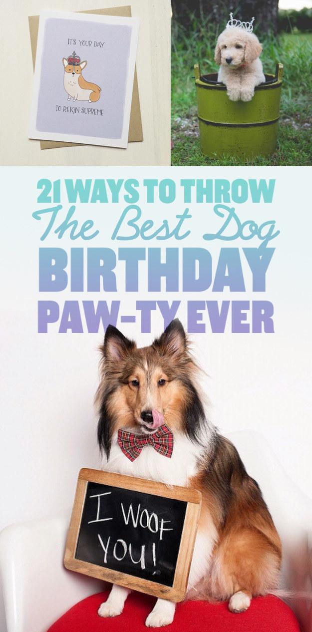21 Ways To Throw The Best Dog Birthday Paw-Ty Ever
