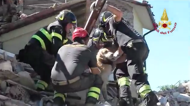The golden retriever, named Romeo, had been sleeping on the first floor of the house and his owners on the second when the quake hit on August 24, according to the Italian news agency ANSA.