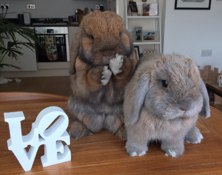 These spectacularly fluffy bunnies.