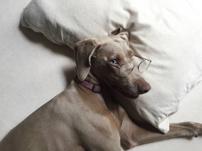 This smart dog will do your taxes, find you a library book on useful herbs, and probably make some kind of minimalist sculpture.