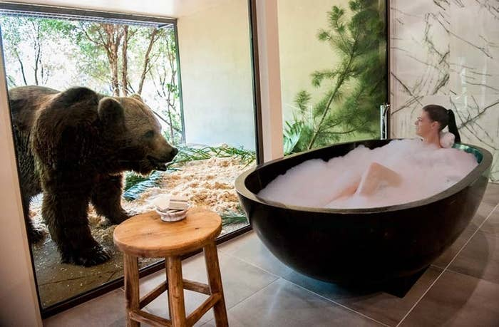 """Lions and tigers and bears – right next to your bed! The National Zoo & Aquarium offers """"the ultimate overnight safari"""" for thrill-seeking holiday makers. WILD."""
