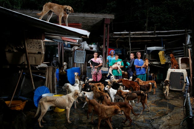 Reuters photographer Carlos Garcia Rawlins and journalist Girish Gupta traveled to the Famproa shelter in Los Teques, in the hills near the capital Caracas, to visit some of the dogs that have been suffering during the country's plight.