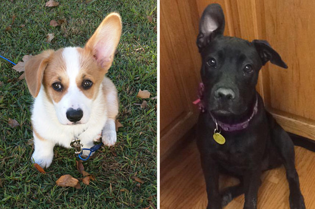 18 Adorable Dogs Who Can Only Lift Up One Ear