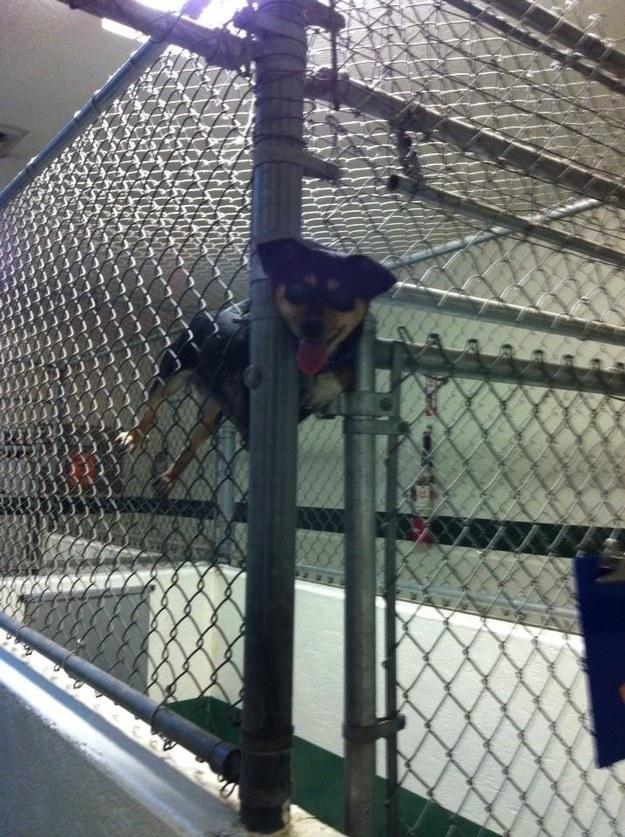 Isto é um esquilo que alguém prendeu em uma gaiola e que deve ser devolvido à natureza.