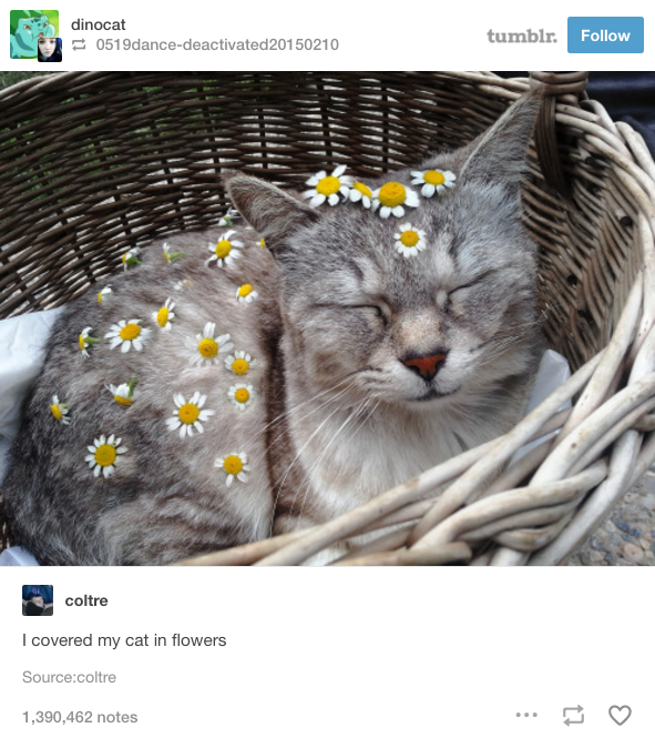 This cat who has a beautiful and floral look.