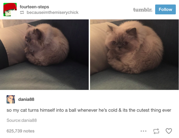 And this perfect sphere of fur.