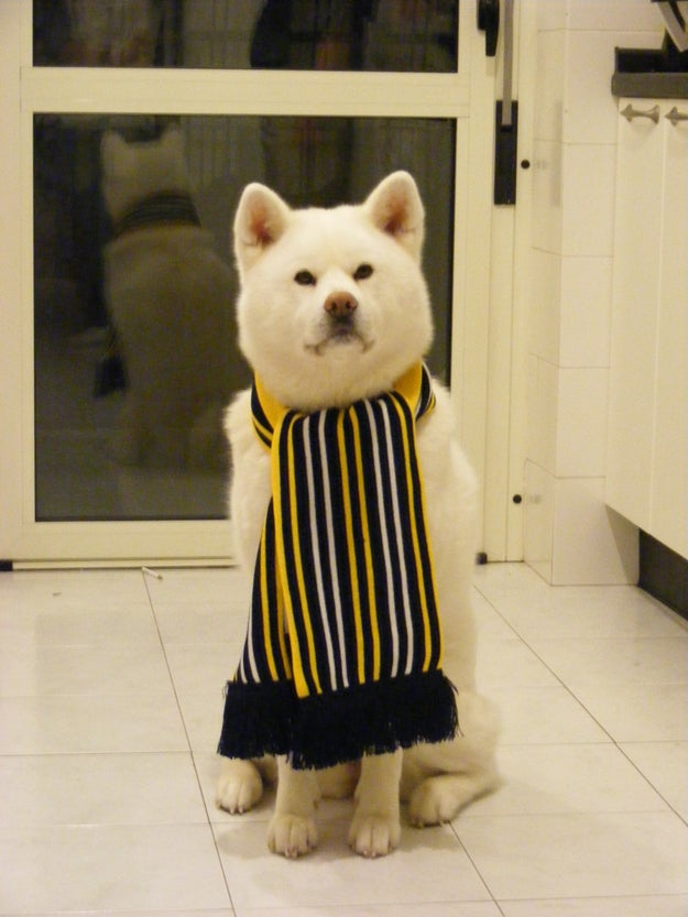 This doggo is staying fashionable despite the harsh climate.