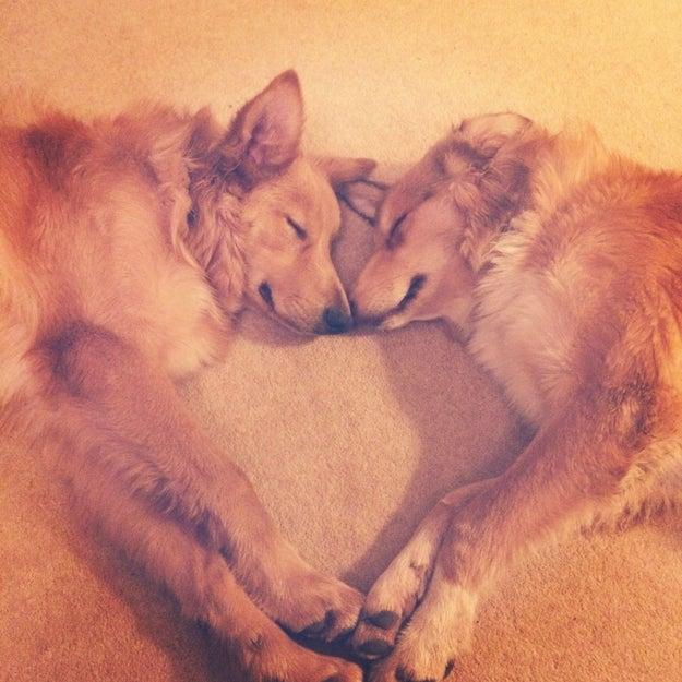 Então, não importa onde esses cãezinhos se enfiarem para dormir, é impossível não amá-los. ❤️