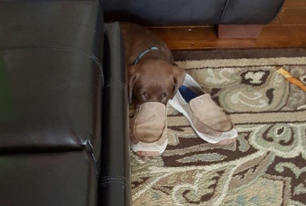 Cães sabem que tirar uma soneca é a melhor coisa que existe, e eles vão fazer isso sempre que puderem.