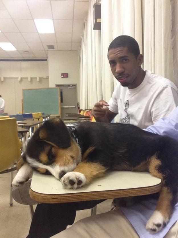 Nem mesmo os cães são imunes a aulas às 8:00 da manhã.