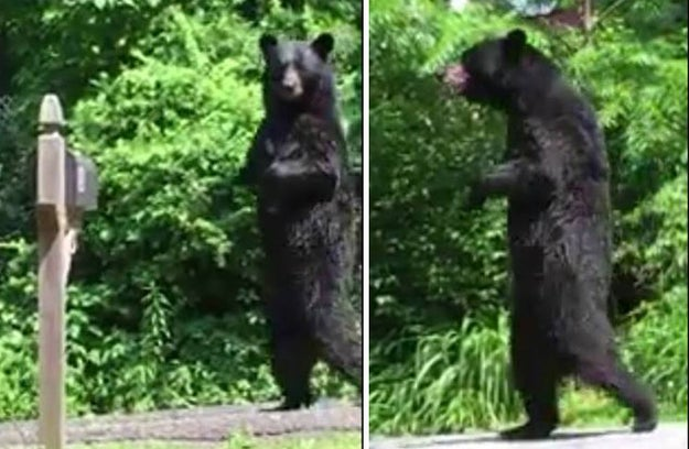 Image result for Hunters Just Killed 27 More Bears In New Jersey