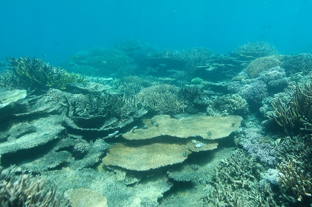 This Is What The Barrier Reef Looks Like Months After The ...