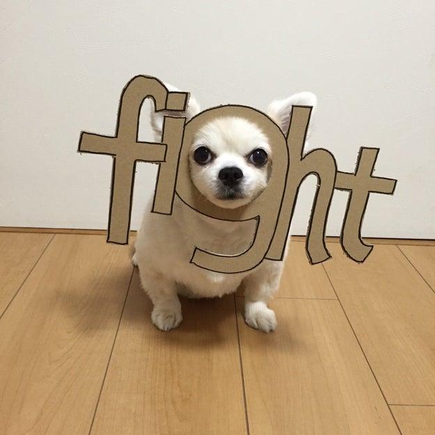 Chihuahua-mametaro says you got to...