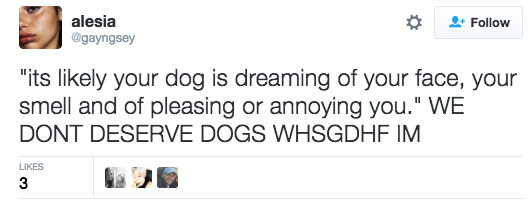 """We're all weeping over this, really. What's the scientific answer to """"What did we ever do to deserve dogs,"""" though? ?"""