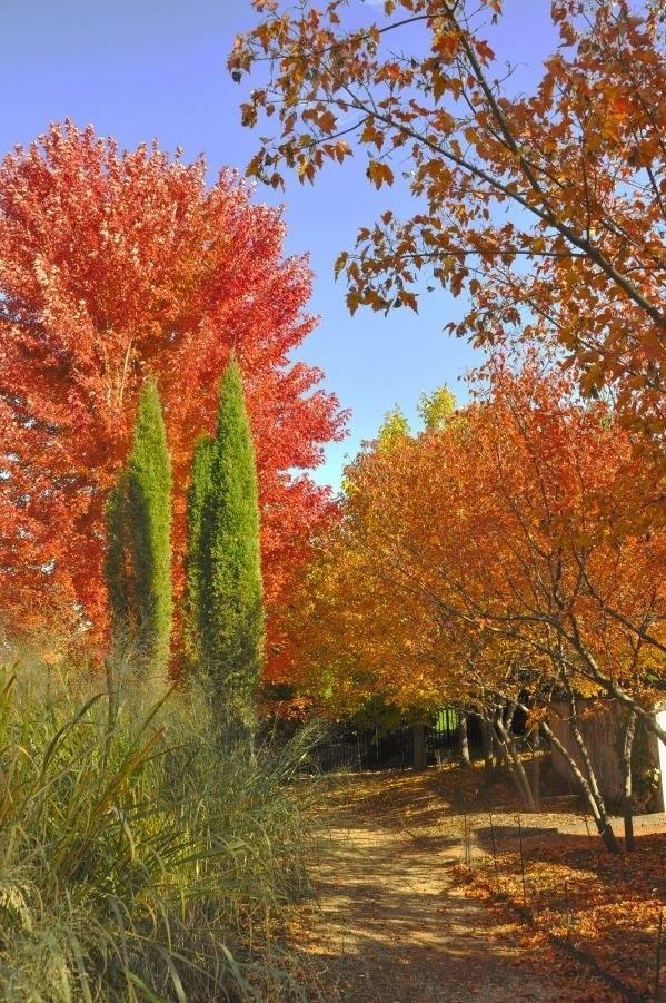 Reiman Gardens