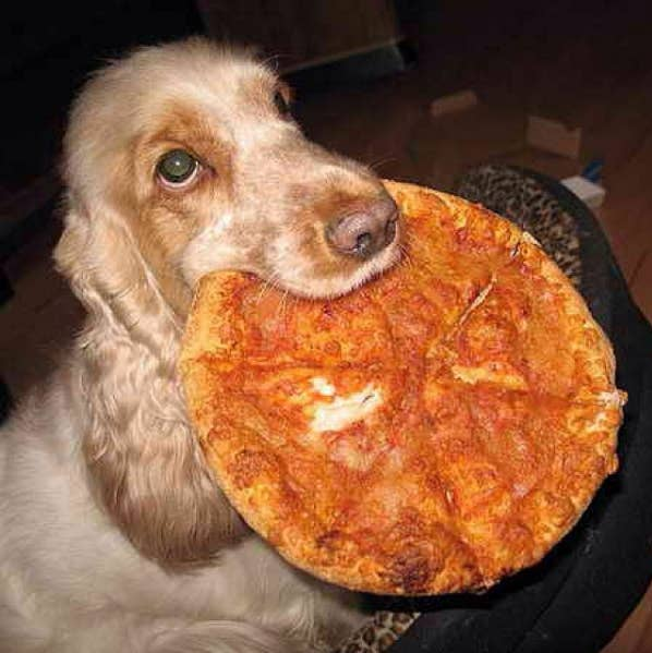 Life Is Hard, So Here's 17 Pictures Of Dogs Loving The Shit Out Of Pizza