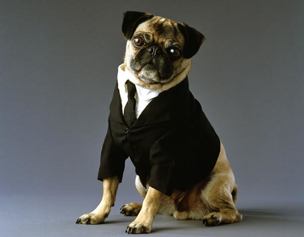 And finally, Frank the Pug from Men In Black I and II