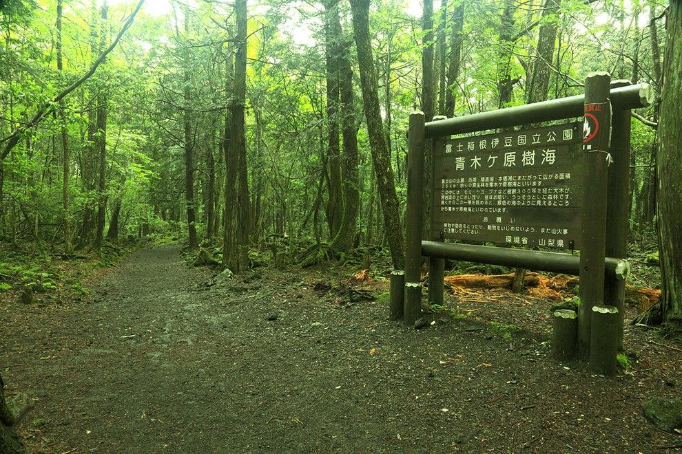 The Aokigahara forest near Fujikawaguchiko, Japan