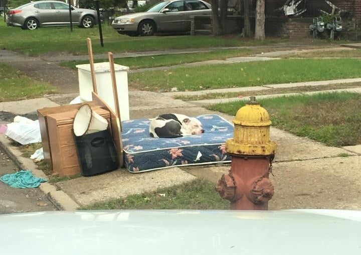 After Dustin Oliver got a tip about an abandoned dog, he arrived to find this: a pit bull curled up on a mattress, waiting for owners that weren't coming back.