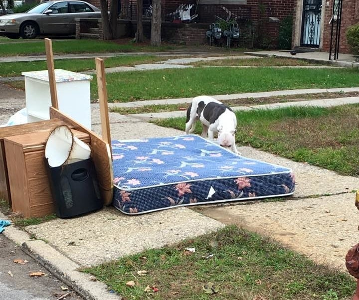 A neighbor told Oliver the dog's family had left a month ago, but their belongings were put on the curb last week. They came back to pick up some items, but the dog — who Oliver named Boo — stayed behind.