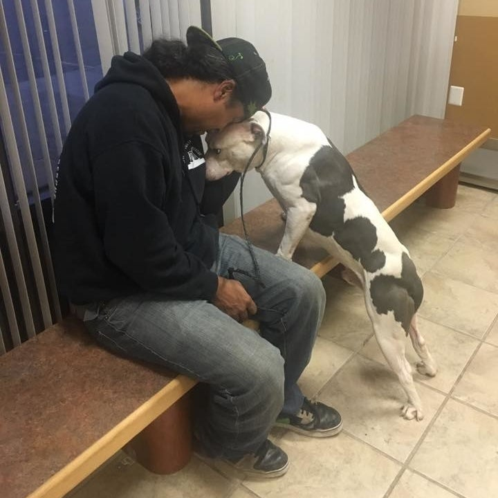 Boo will live with a foster family while he's being treated for heartworm. Once he's better, Detroit Youth & Dog Rescue will find him a local forever home.