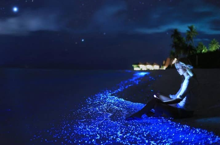 Absolutely stunning beaches in maldives that you should not miss the beach on vaadhoo island glows at night almost like a mirror reflecting the stunning publicscrutiny Image collections
