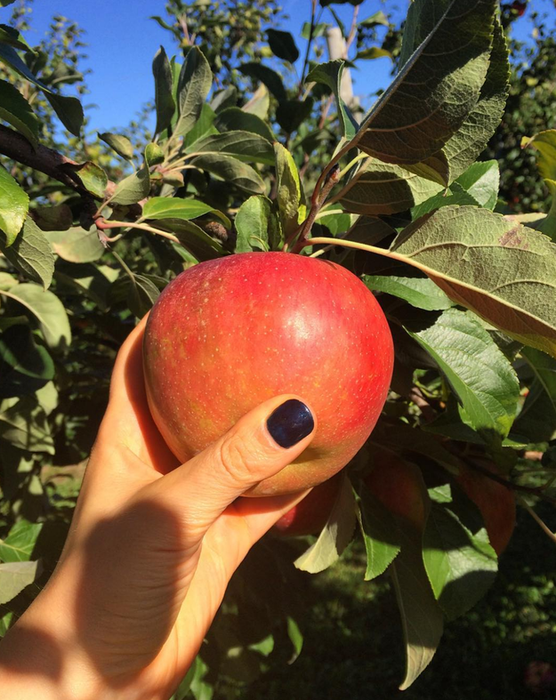 Honeycrisp apples are often touted as the very best for eating raw, as they're sweet and always super crunchy. (Honey + crisp. Get it?)