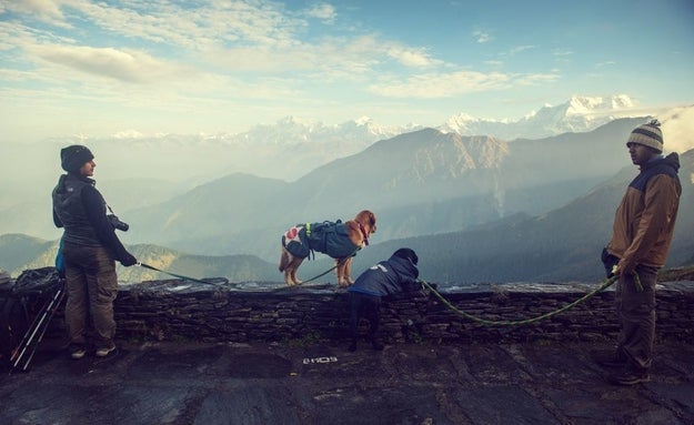 He recently visited Chopta, a hill station in Uttarakhand, with his friends Rukmini and Vijay. The couple runs a company called Collarfolk in New Delhi that plans vacations for families with dogs.