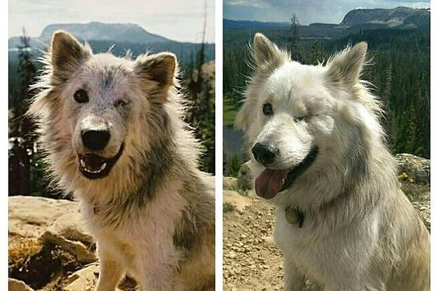 Rescue Dog Transformations That Will Restore Your Faith In Humanity - 27 amazing transformations of dogs and cats before after adoption