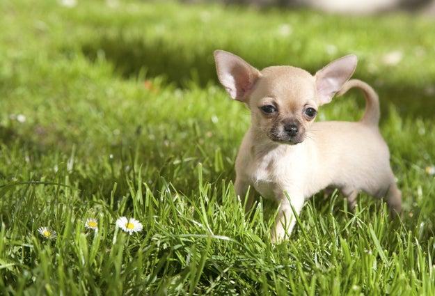Las pasas pueden causarle problemas muy serios a los perritos por un componente tóxico dentro de ellas. ¿Necesitas más razones para odiarlas?