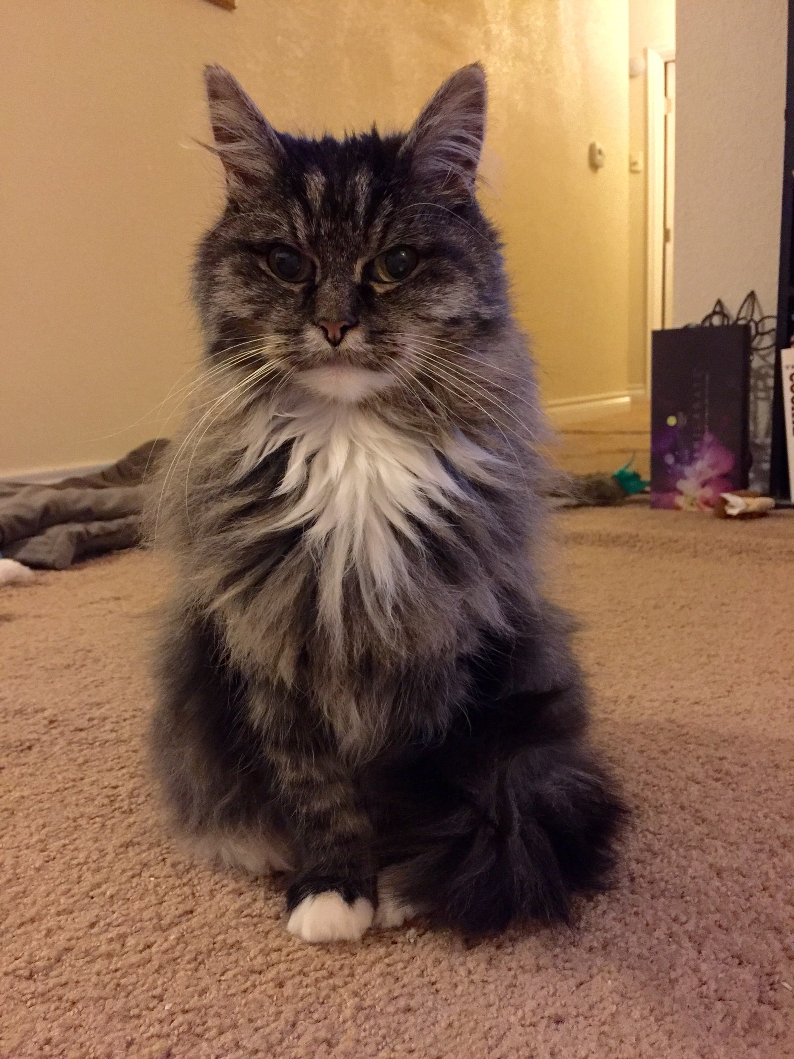 16 Cats Who Hate How Fluffy They Are