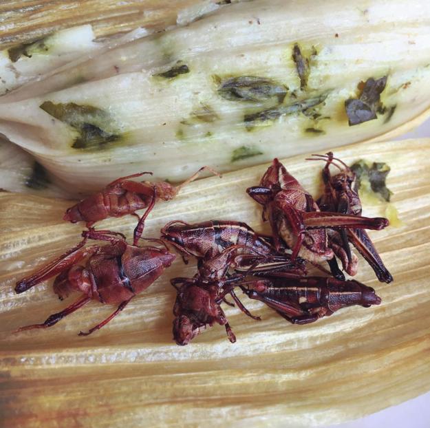 Tamales suaves y chapulines crujientes.