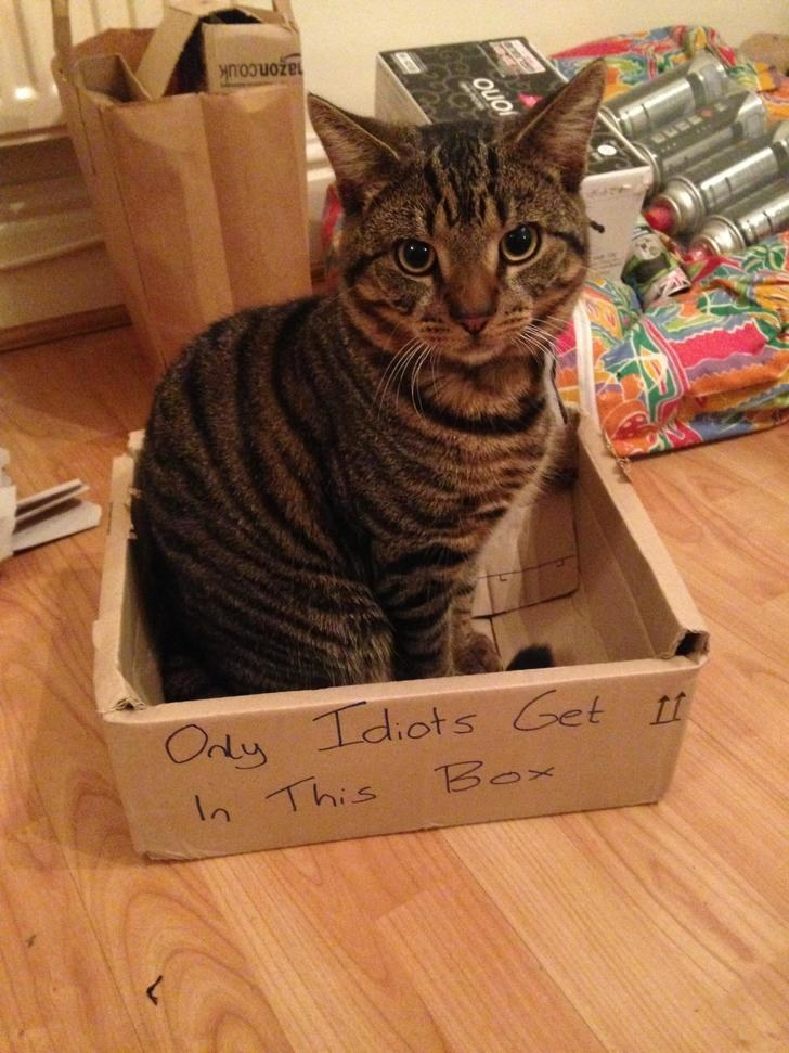 19 Cats Who Are Beautiful Furry Idiots